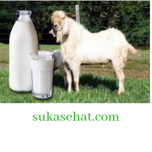 Susu kambing murni