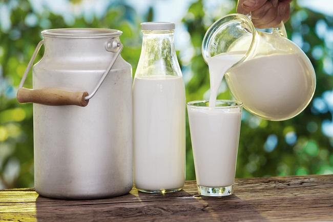 Fakta Susu Kambing Etawa yang Perlu Anda Ketahui